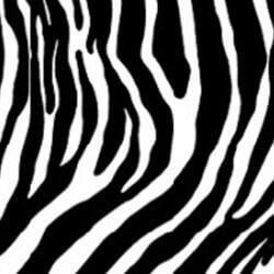 Zebra Glas
